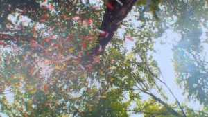 Pepperminta (2009) video/trailer