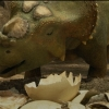 Blu-Ray Review: Walking with Dinosaurs