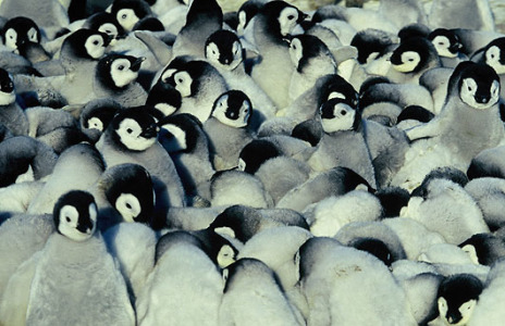 March Of The Penguins
