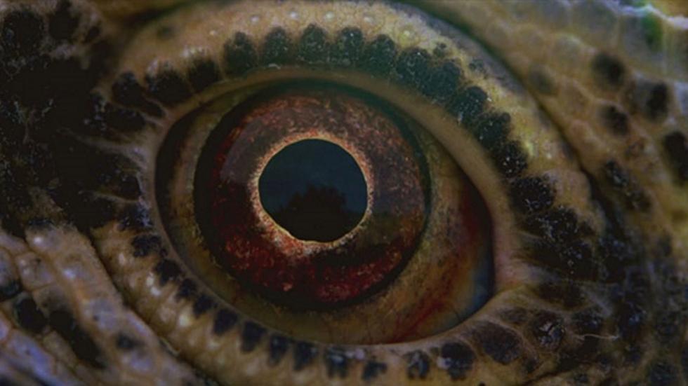 Prachtige eerste beelden Terrence Malicks 'Voyage of Time'