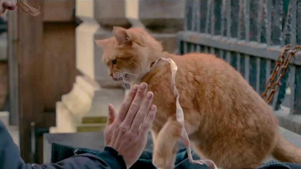 Dierenliefde in trailer 'A Street Cat Named Bob'