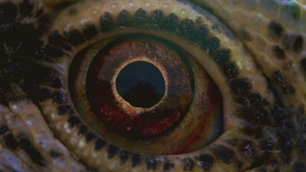 Eerste poster Terrence Malicks 'Voyage of Time'