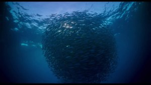 Voyage of Time: Life's Journey (2016) video/trailer