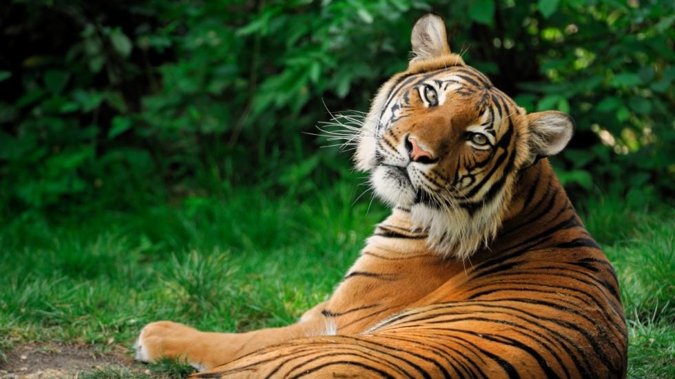 Wildlife Film Festival brengt natuur naar Rotterdam
