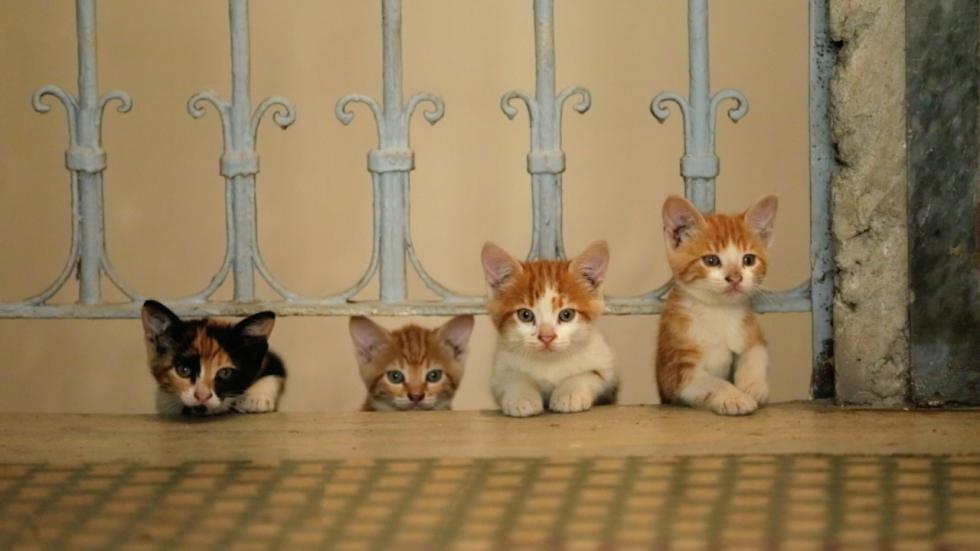 Katten, katers en poesjes in trailer 'Kedi'
