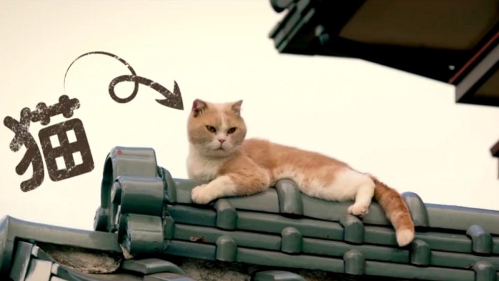 Mysterieuze katten in teaser 'Neko Atsume's Home'
