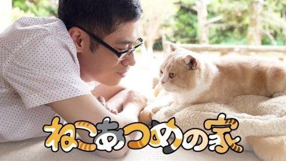 Neko Atsume no le - teaser
