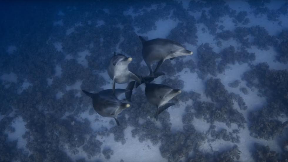 Trailer voor Walt Disney's (mysterieuze) 'Dolphins'