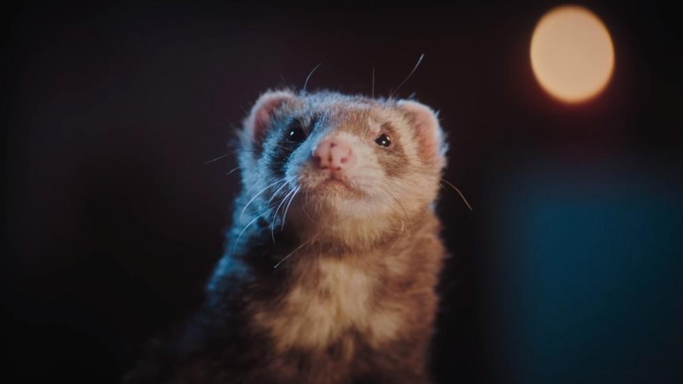 Blu-ray review 'Voor Elkaar Gemaakt' - lachen met Loes Haverkort?