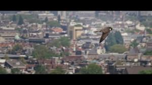 De Wilde Stad (2018) video/trailer