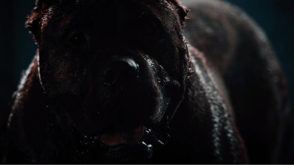 Blu-ray review 'Bullet Head' - met vechthond DeNiro