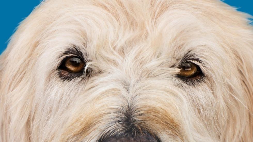 Vanessa Hudgens en schattige honden in komische trailer 'Dog Days'