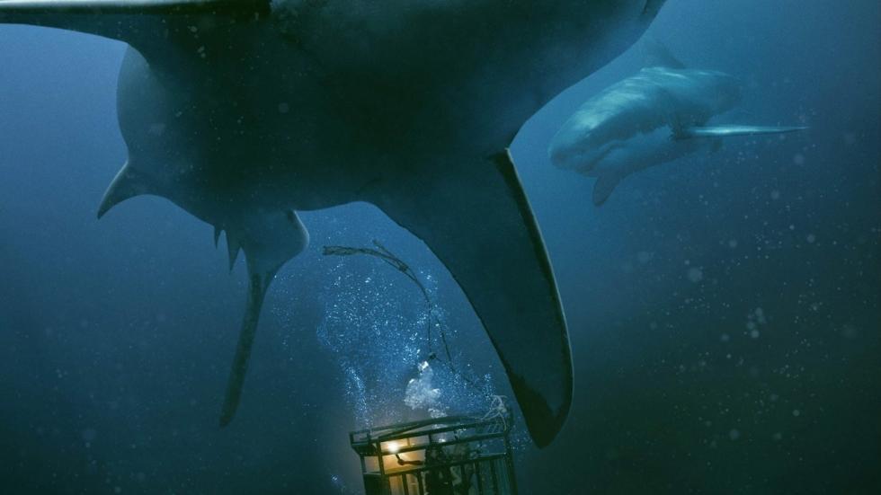 Véél haaienvoer in eerste teaser horrorfilm '47 Meters Down: The Next Chapter'