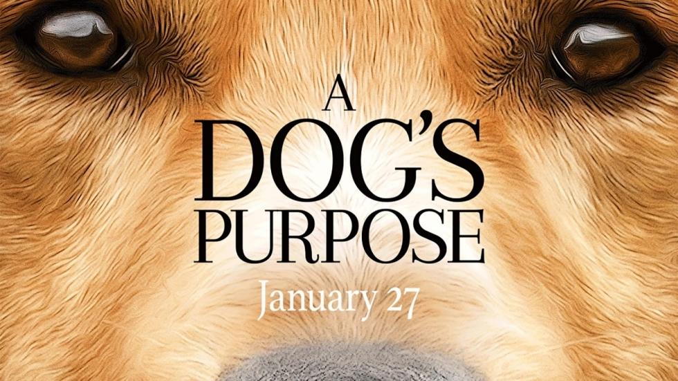 'A Dog's Purpose'-vervolg 'A Dog's Journey' momenteel in de maak