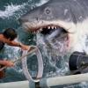 We gaan dansen en zingen op de haaienklassieker 'Jaws'