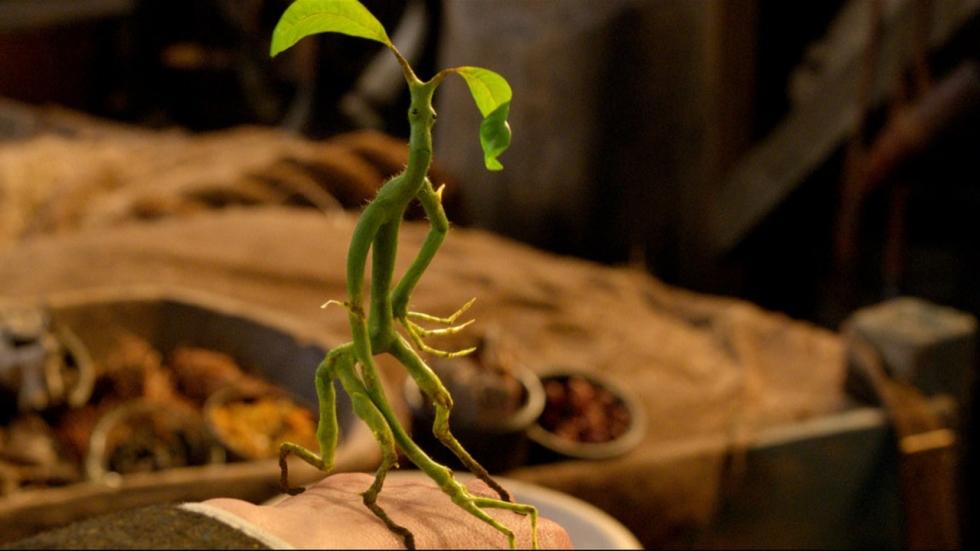 Nóg een grote blunder in 'Fantastic Beasts: The Crimes of Grindelwald' gespot!