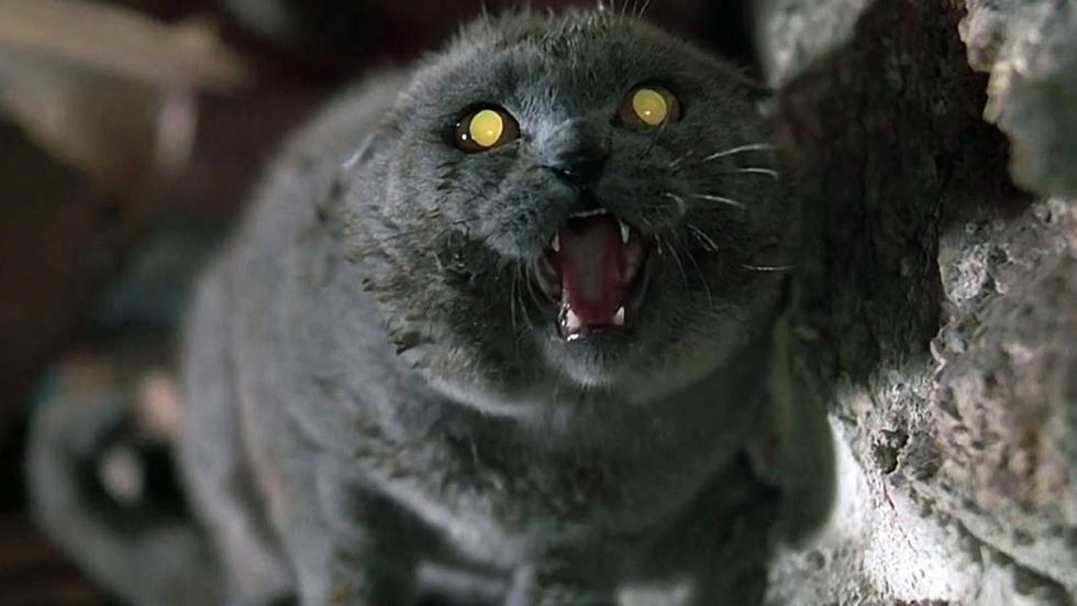 Eerste reacties Stephen King-film 'Pet Sematary'!