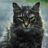 Regisseurs balen van spoilende trailers 'Pet Sematary'