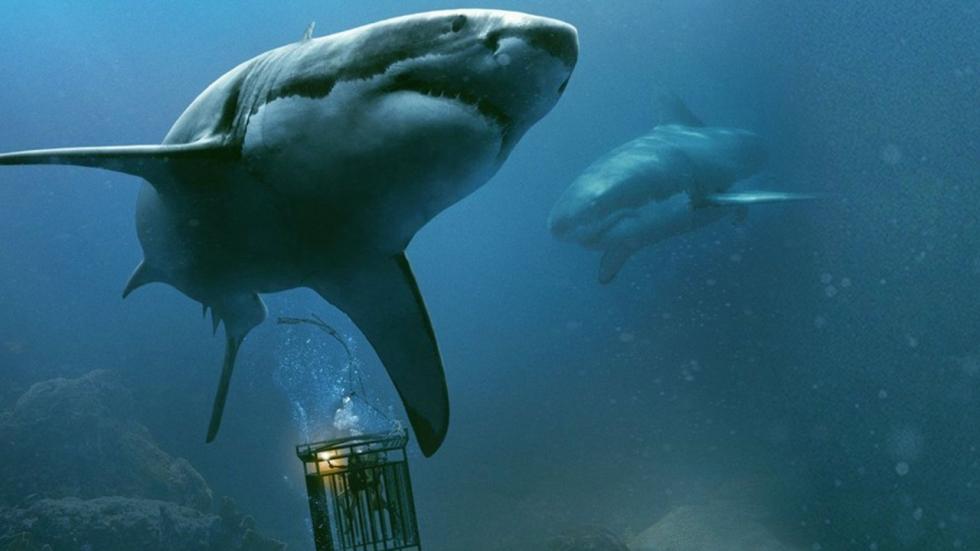 Bloeddorstige haai maakt jacht op duikende meisjes in trailer '47 Meters Down: Uncaged'