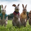 Trailer 'Peter Rabbit 2: The Runaway'!