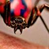 Jochies laten zich bijten door een gevaarlijke spin om Spider-Man te worden
