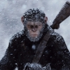 Untitled Planet of the Apes Project