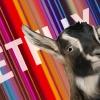 Netflix startte bijna op met een mekkerend geit!