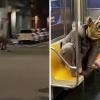 Virale filmpjes van enorme rat in New York blijken opnames voor een film