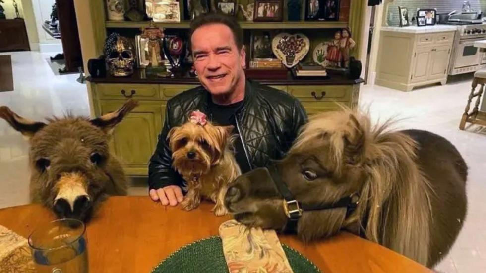 Je gelooft nooit wat voor huisdier Arnold Schwarzenegger heeft